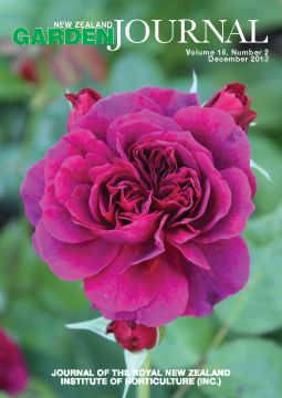 Rosa 'Prospero', a David Austin English Rose. Photographed by Jack Hobbs at Ayrlies Garden.
