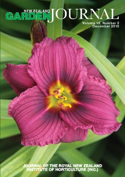 Hemerocallis 'Little Grapette'.