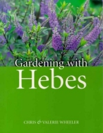 Gardening with Hebes