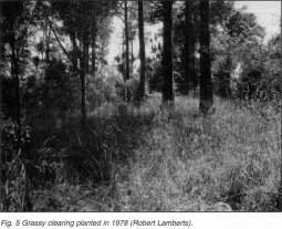 Fig. 5 Grassy clearing planted in 1978 (Robert Lamberts)