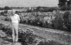 Fig. 11: Luc Decourtye with New Zealand provenances of Hebe (foreground) and Leptospermum (background) under evaluation for cold hardiness at Angers, France.