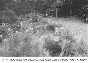 Alpine rock gardens at Otari Native Botanic Garden