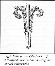 Fig. 3 - male parts of flower