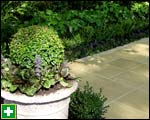 Ajuga at the base of a box topiary
