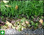Pebbles, ajuga and grass