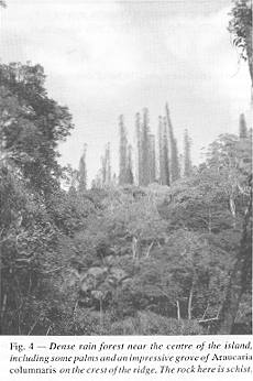 Fig. 4 - Dense rain forest near the centre of the island