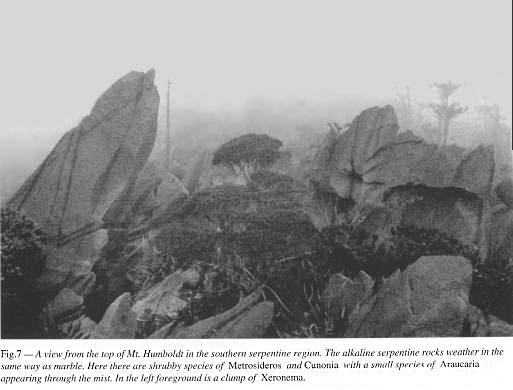 Fig. 7 - A view from the top of Mt. Humboldt in the Southern Serpentine region